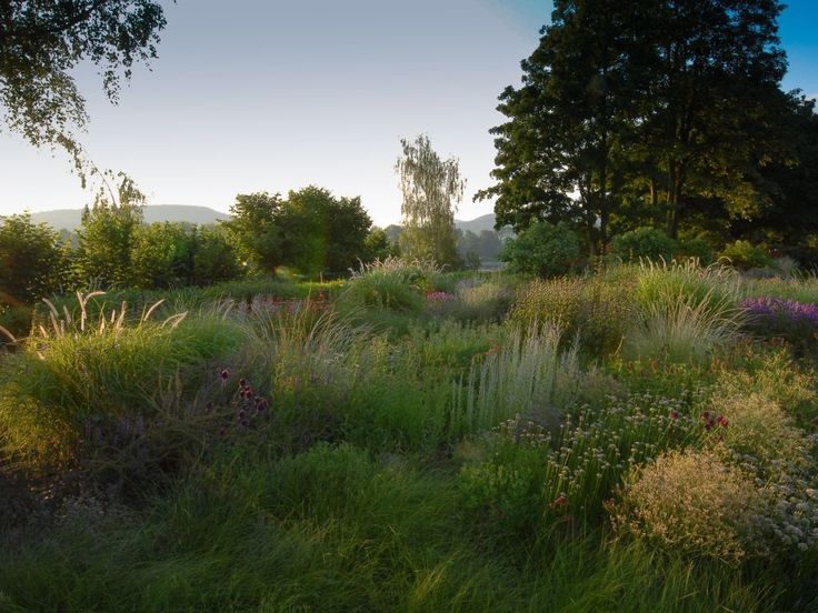 166 best images about piet oudolf the master on for Piet oudolf private garden