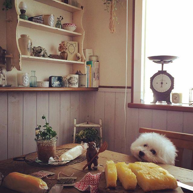 ✐✎⸝⸝⸝⸝2017.08.24 (THU)⸝⸝⸝⸝✐✎ 僕チン 暑くてたれてます┄ ꒰ຶค̅ㅈค̅ ꒱ຶㆀ ⑅⑉˖⑅⑉˖⑅⑉˖⑅⑉˖⑅⑉˖⑅⑉˖⑅⑉˖⑅⑉˖⑅⑉˖⑅⑉˖⑅⑉˖ #手作りおやつ #パインのケーキ #ホーローバットで作るうちのお菓子 #シュライヒ #くま #刺し子 #ふきん #ラッピングくるくる中 #トイプードル ⑅⑉˖⑅⑉˖⑅⑉˖⑅⑉˖⑅⑉˖⑅⑉˖⑅⑉˖⑅⑉˖⑅⑉˖⑅⑉˖⑅⑉˖