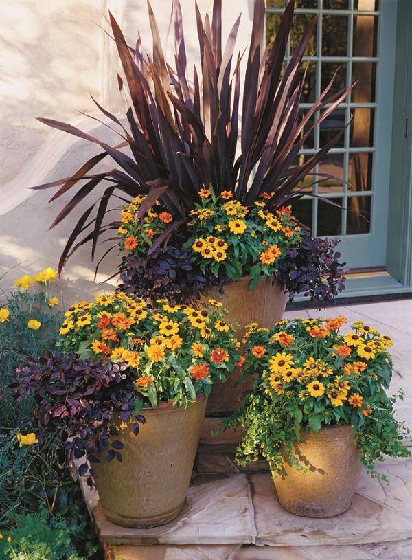 25 best fall flower pots ideas on pinterest fall potted for Flowers that require low maintenance