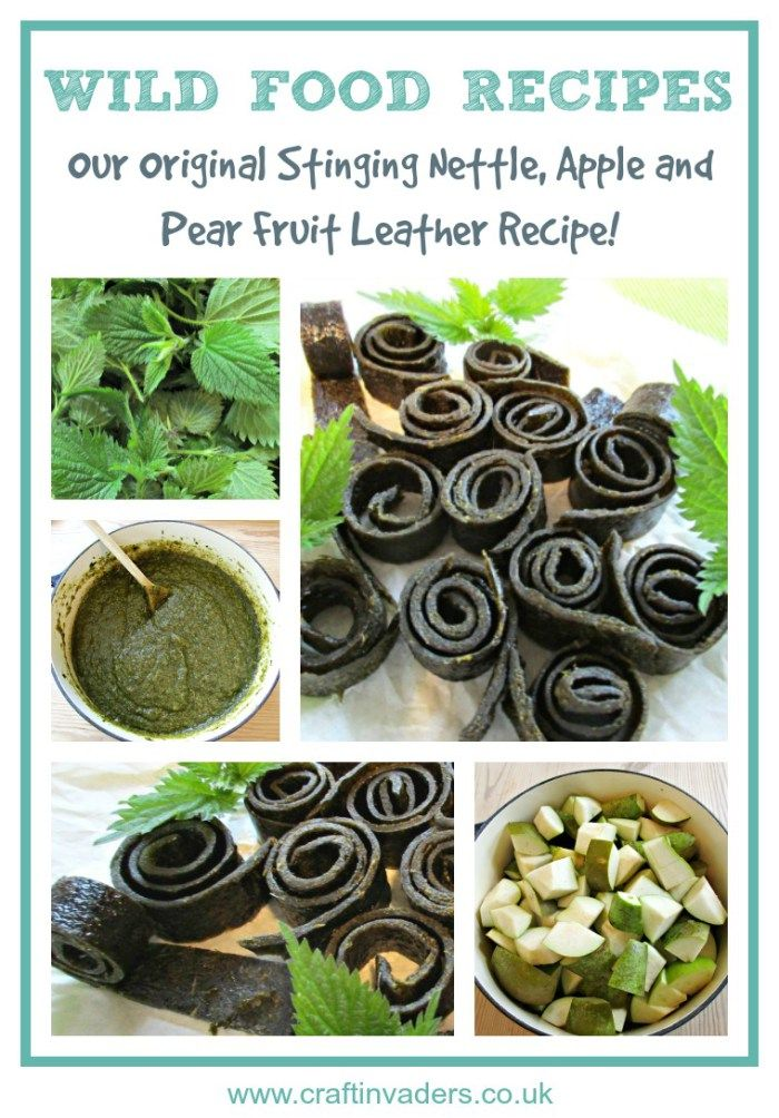 Nettles are hugely nutritious, with all sorts of health benefits, so I am delighted to have come up with this recipe for Stinging Nettle, Apple and Pear Fruit Leather, which the kids are so keen to eat.
