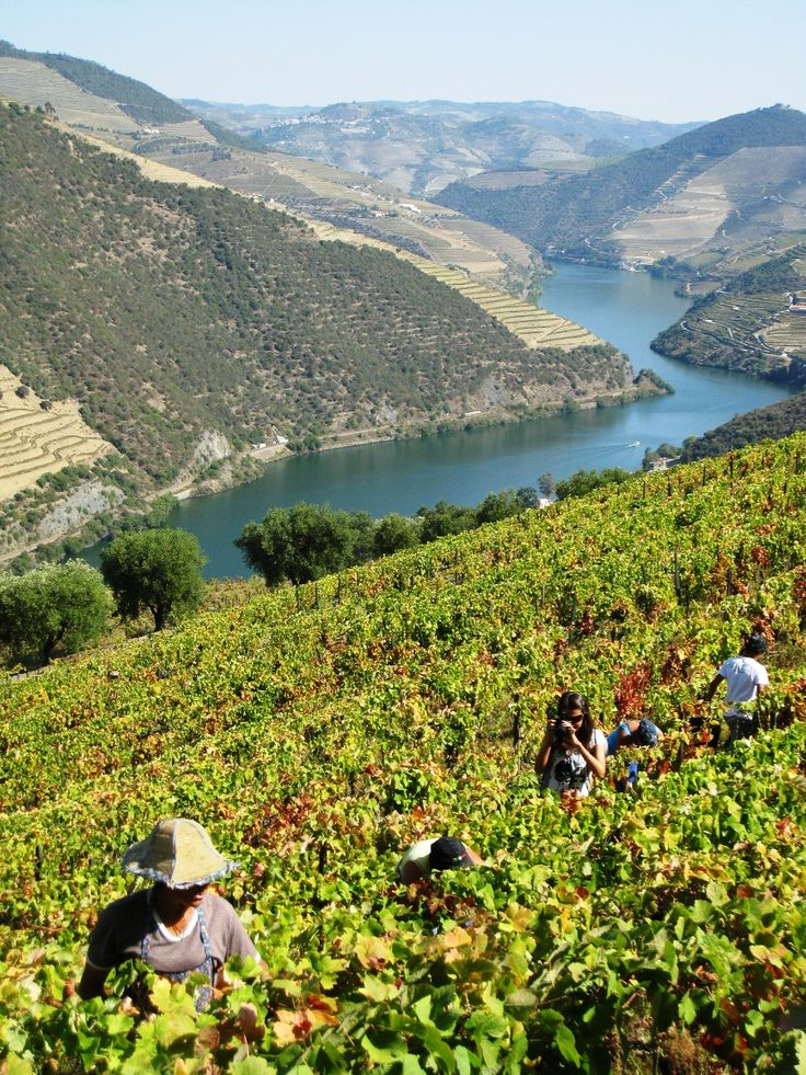 #PortWine vineyards Douro-Portugal!