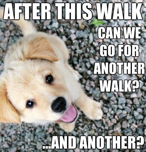 Cute puppy meme! Such a funny loldog ~ pretty much the cutest puppy ever!
