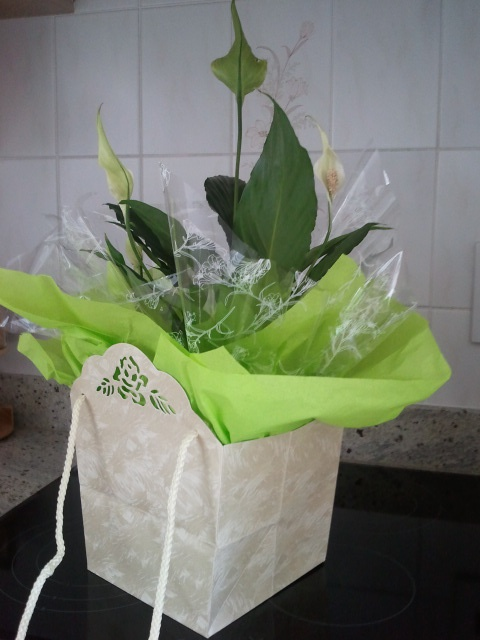 Mother Hen Strikes Again!: Gift Wrapping Plants....