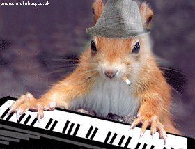 Humour écureuils, photo drôle Chipmunk, image comique de Chipmunks trop mignons, funny squirrels, GIF animé humoristique gratuit d'écureuil, gag amusant d'écureuil roux