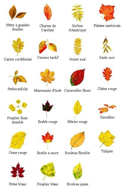 différentes sortes feuilles d'arbres