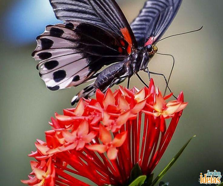 As borboletas adoram plantas com néctar e hospedeiras. E essa é apenas uma das várias dicas de como atrair borboletas para seu jardim. Confira mais no blog: http://bit.ly/1GlUoZF