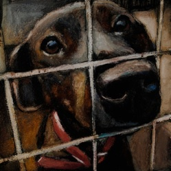"""I will keep re-pinning this until it's shared as often as some random """"thirty surprising uses for coffee filters"""" tipsheet!  Please pin ;)      A Louisville artist is painting 5,500 dog portraits to represent the number killed each day in shelters across the United States.  Each painting is of a specific dog and provides his or her name and kill-date.  What a powerful visual representation of what we humans do to our """"best friends"""".      You are able to sponsor the painting of a dog for as…"""