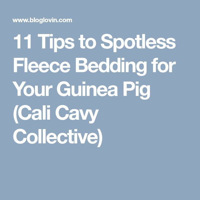 11 Tips to Spotless Fleece Bedding for Your Guinea Pig (Cali Cavy Collective)