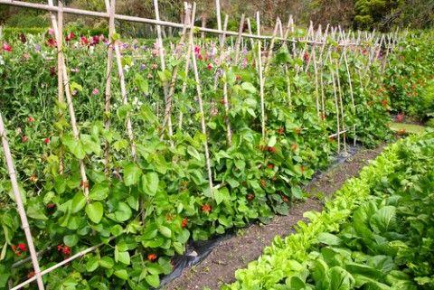 7 натуральных средств для защиты и роста цветов и овощей