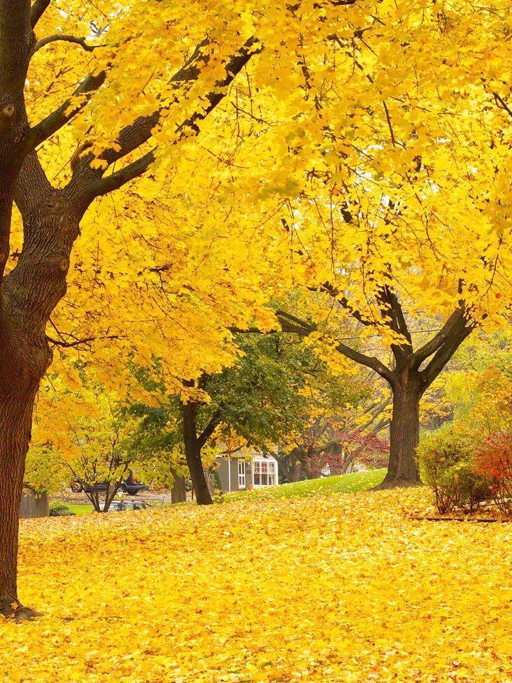 Autumn Trees / 7747: