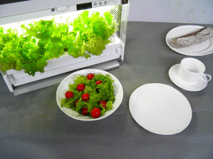 Najlepsze jest zdrowe śniadanie z własnych upraw domowych. Chcesz cieszyć się smakiem niesamowicie świeżych warzyw? Odwiedź nasz sklep i zamów swój egzemplarz domowej szklarni do całorocznych upraw hydroponicznych Green Farm, a potem pokaż swoje plony. :-) #GreenFarm #Hydroponika #DomowaUprawa #DomowyOgród #UprawiamWłasneJedzenie #StylŻycia #BezPestycydów #CzystaMicha   #Wzornictwo #BliżejNatury #UprawiajToSam #IndoorGarden #Hydroponics #ContainerGardening #UrbanGardening #LifeStyle #Design
