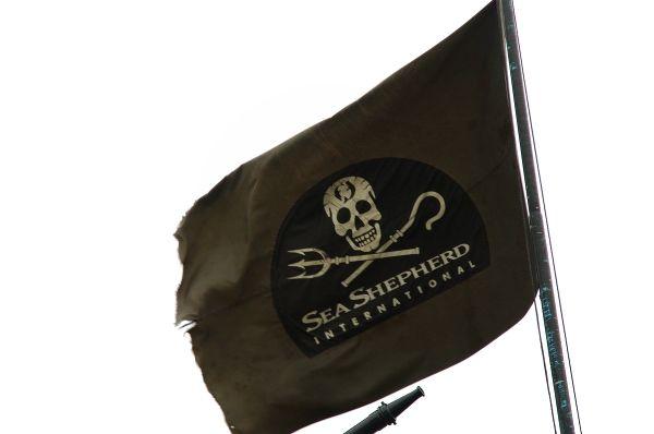 Sea Shepherd: Seashepherd Small Pt Jpg, Sea Shepherd, Shepherd Stupidity