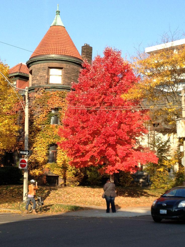 Fall season - EXT colour