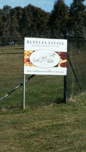 Truffle Farm Canberra Australia