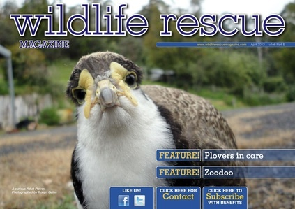 Issue 6B - RRR of the plover, RFID in wildlife, contests, #Jill_Morris, #plover ... http://wildliferescuemagazine.com/issue-six.html