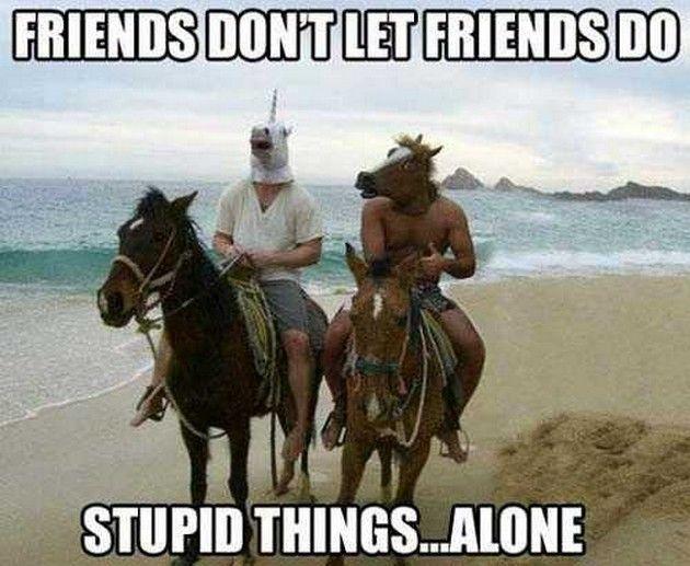Funny Horse Memes (13 Pics) - https://www.soumo.eu/funny-horse-memes-13-pics-2/
