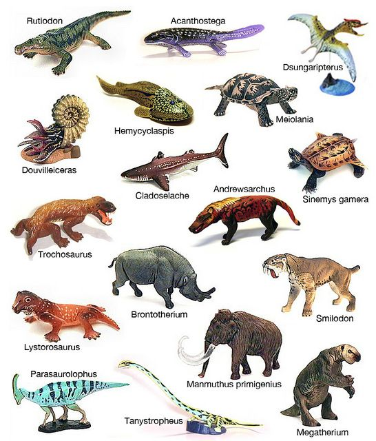 Prehistoric Animals Toys : Best images about prehistoric life on pinterest