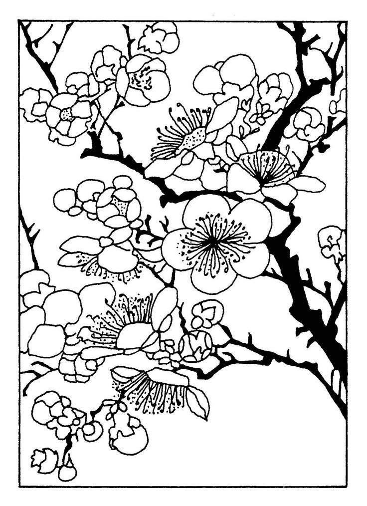 316 best Coloring pages I love. images on Pinterest