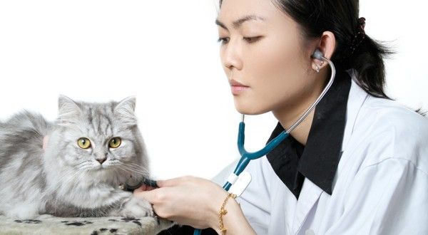 Reply Accurately To Your Cat Vet Questions!