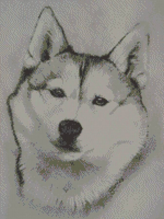 Best Husky Images On Pinterest Drawings Drawing And Embroidery - Guy quits his job to go on epic adventures with his husky