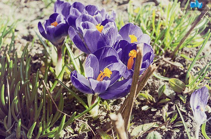 Skierniewice: Wiosna zawitała do miasta na dobre