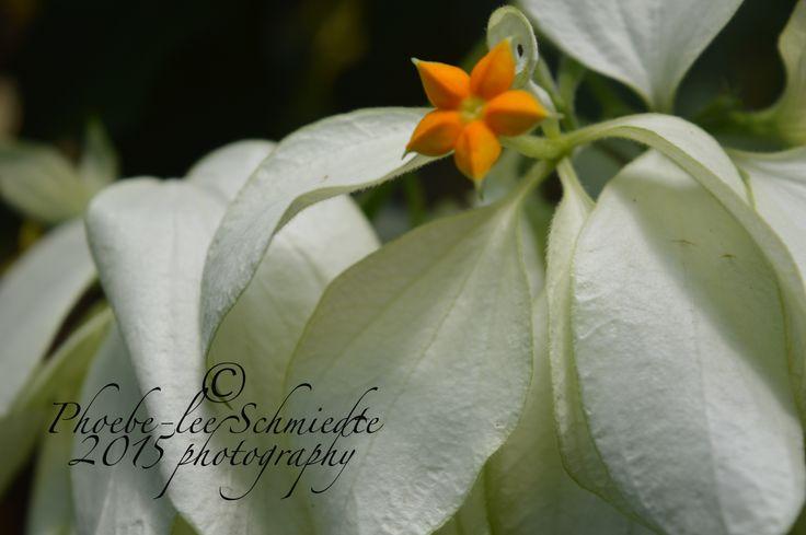cute little star shaped flower in bali,2014
