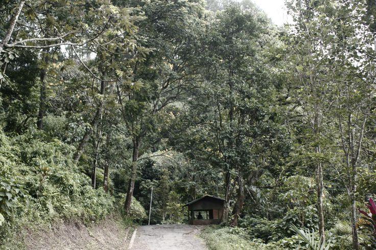 Juanda Forest, Bandung Indonesia