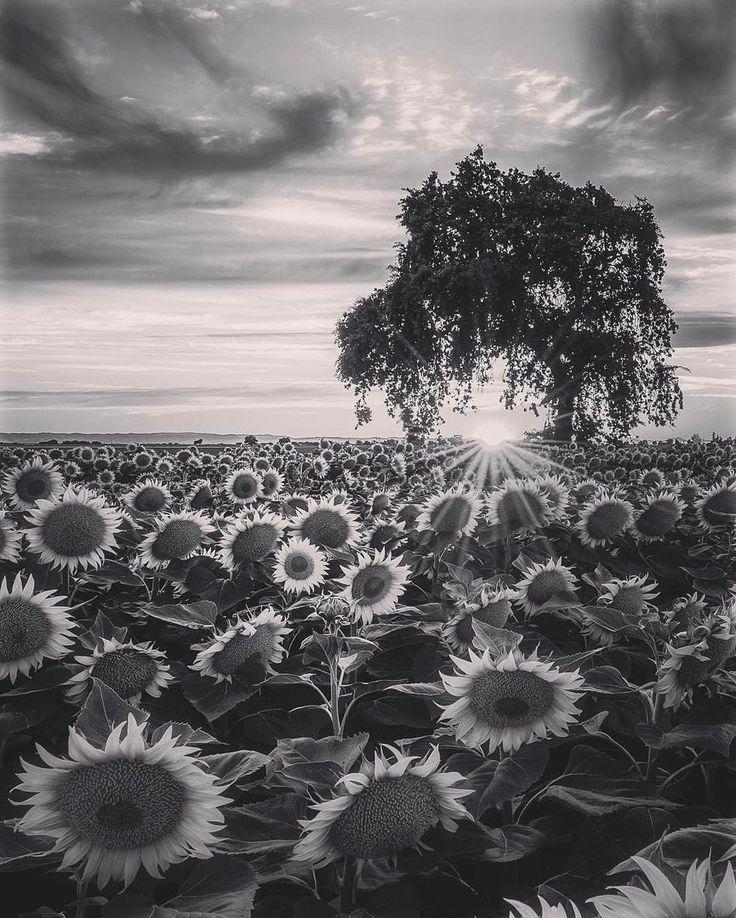 Чёрно-белая фотография