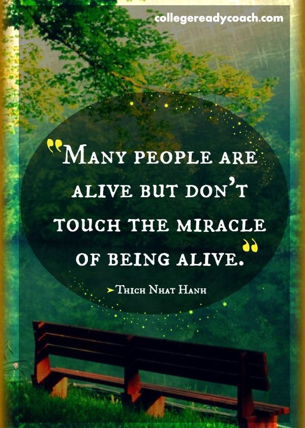 Image result for thich nhat hanh quotes being sleepy