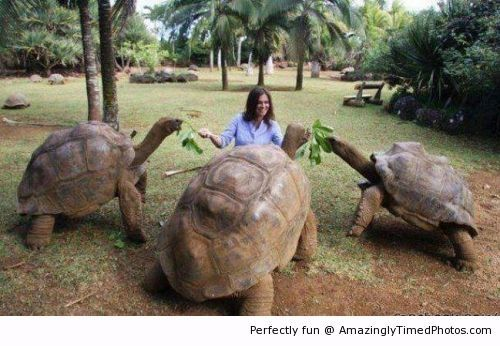 Amazingly Timed Photos | The Galapagos Tortoise