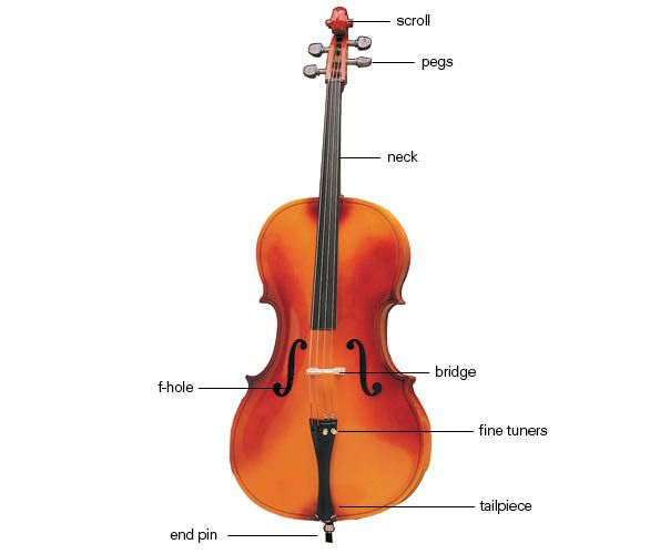 violin bow diagram cello diagram