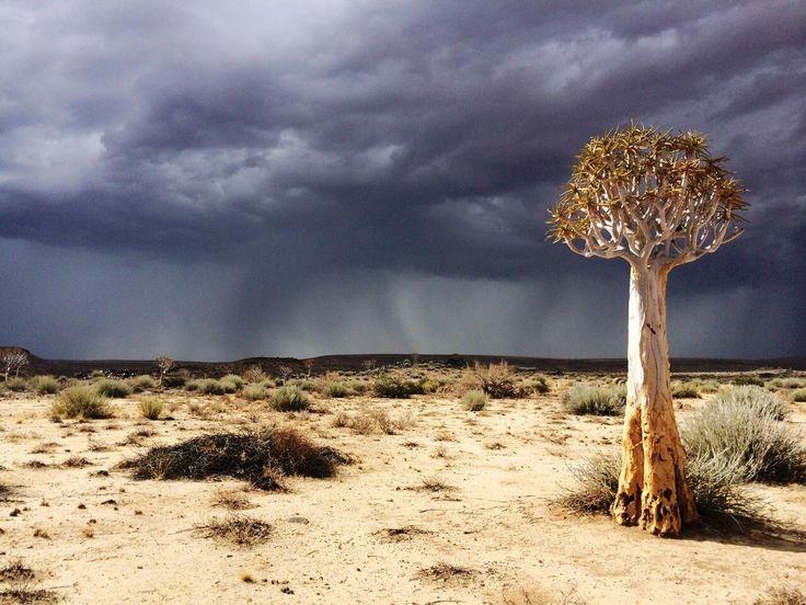 The promise of rain.  Image by Jens Vietor http://bit.ly/gondwana-canyon-park-namibia #namibia #fishrivercanyon #gondwana #rain #quivertree