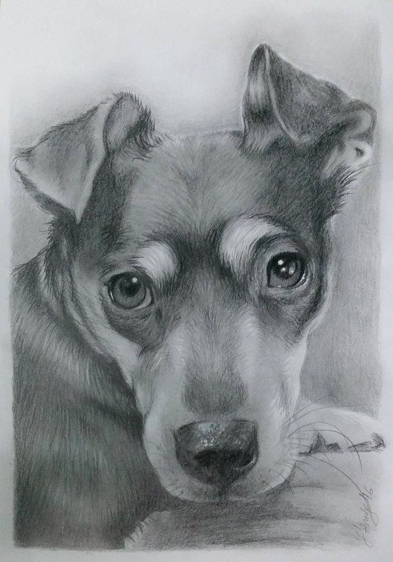 Puppy custom portrait Dog memorial Dog Sketch Artwork
