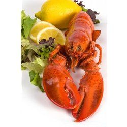 All of our price include overnight shipping. Delivered Fresh and Live! 1 and 1/8 lb Live Maine Lobster -- Pack of 4