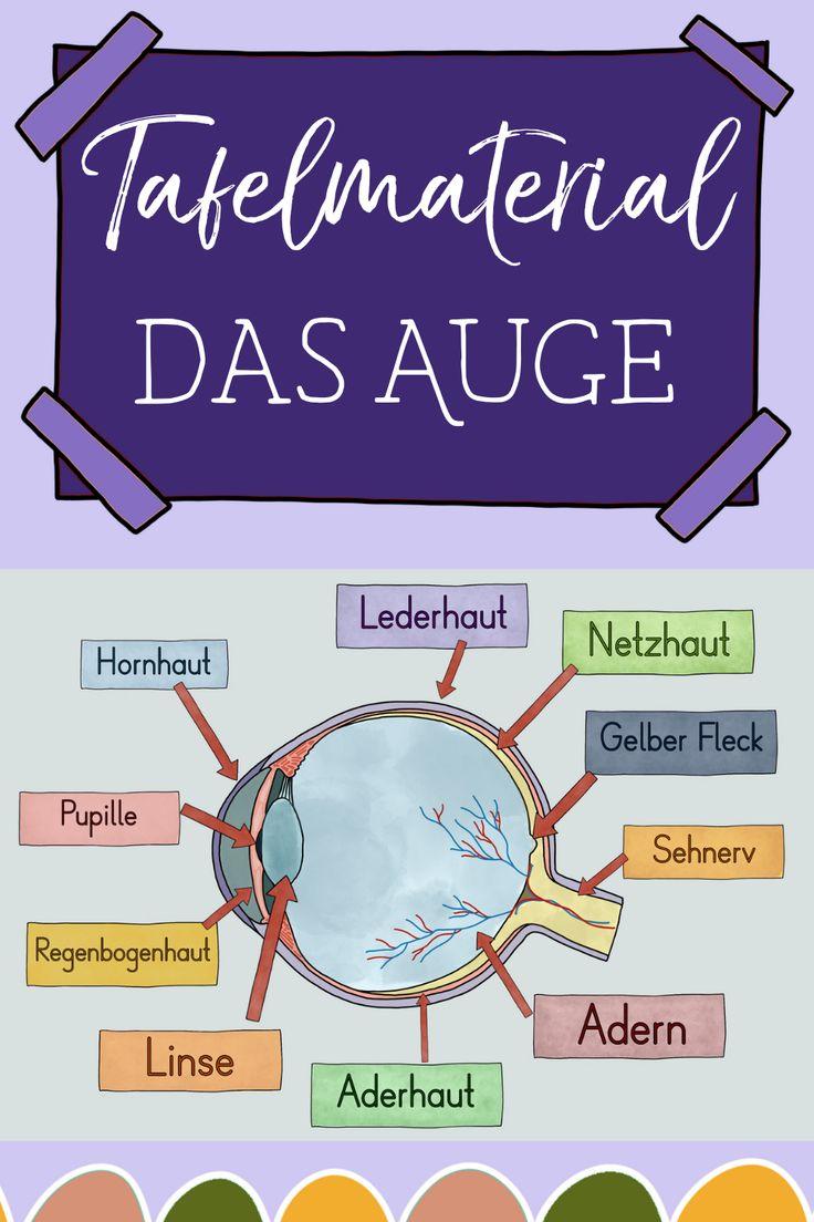 Auge Grundschule Arbeitsblatt