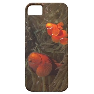 iPhone5 case featuring a colorful pair of clownfish nestled in the anemone that they call home.
