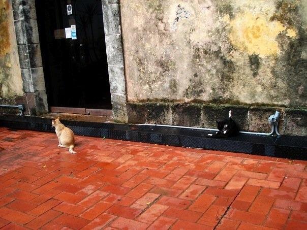 The cats of Casco Viejo
