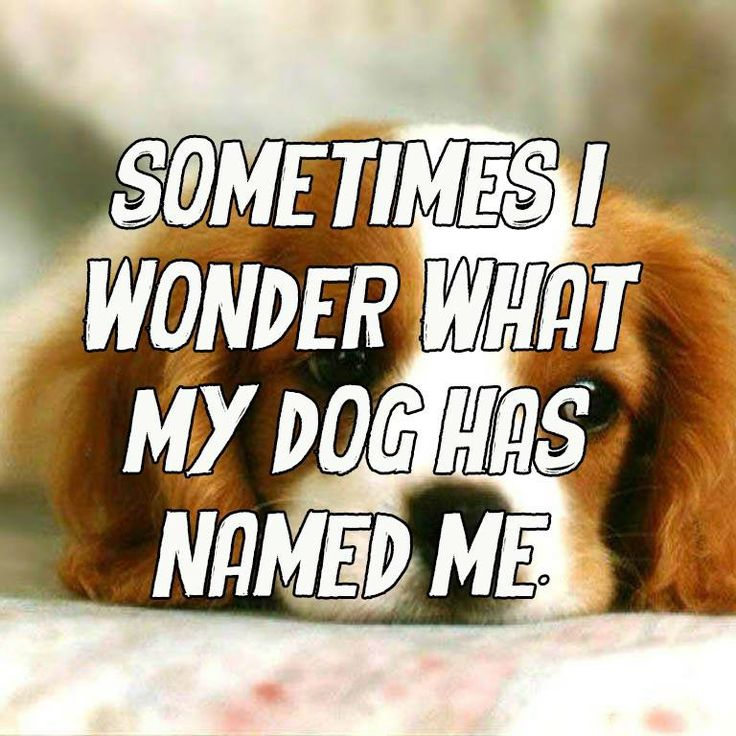 My dog probably has some crazy name for me!