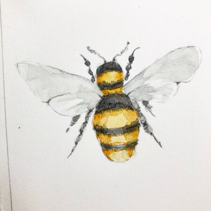 Watercolor Bee By Anja A Waage