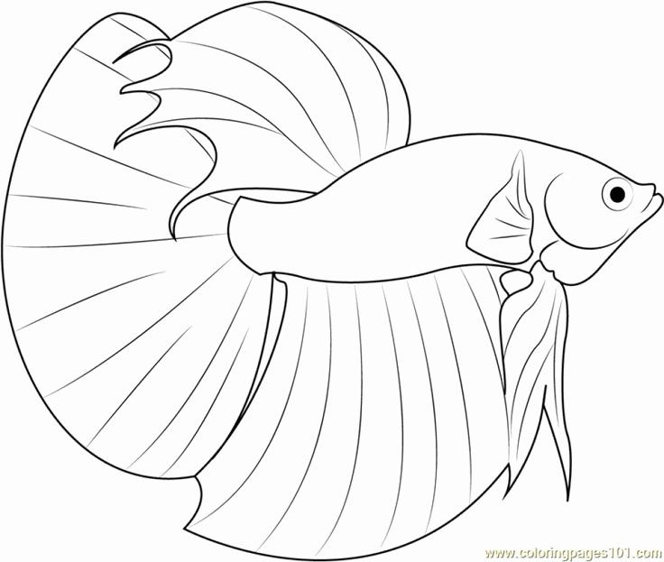 28 Betta Fish Coloring Page In 2020 Fish Coloring Page Lego