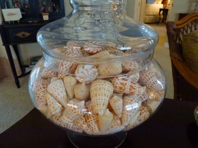 23 best images about seashell display ideas on pinterest for Ideas for displaying seashells