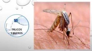 ¿Como aliviar las picaduras de insectos?-Remedios caseros. Las mordeduras y picaduras de insectos pueden causar una reacción cutánea inmediata. Las mordeduras de las hormigas y las picaduras de abe...