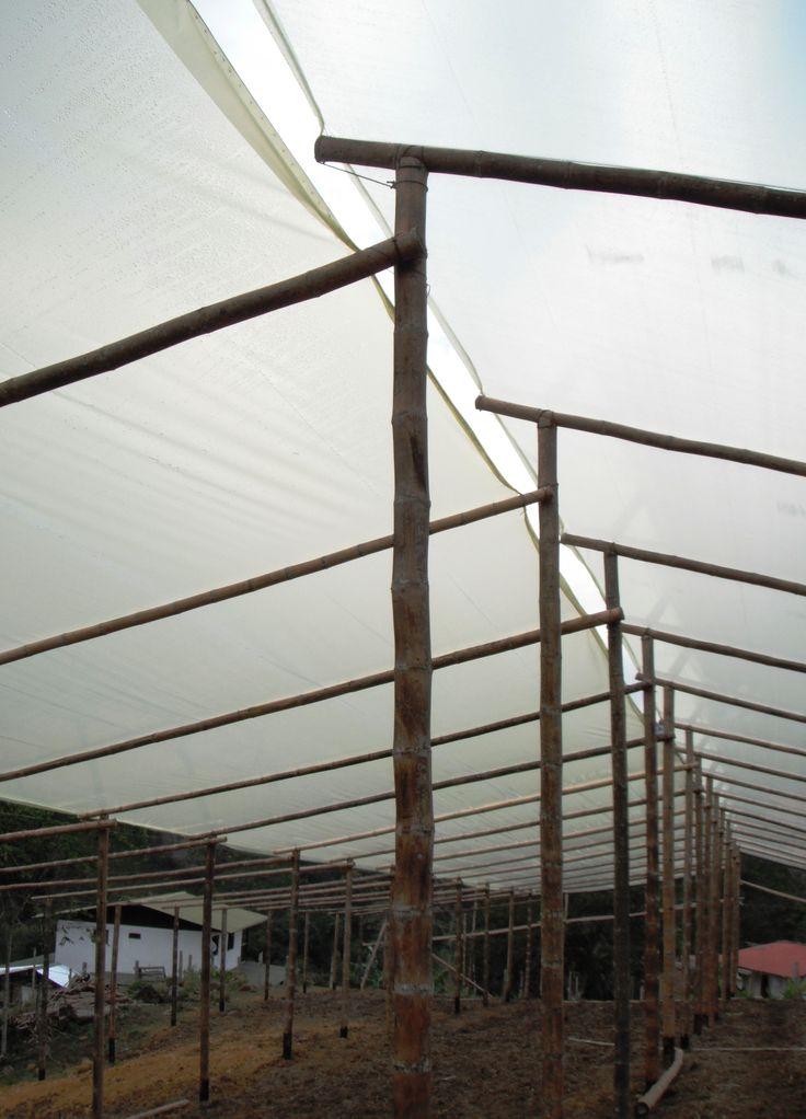 Invernadero para cultivo de tomate orgánico en La Elvira, Cali [CO]. Proyecto de Hernando Munoz.