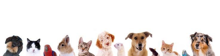 """""""Mein Mensch und ICH"""" - das ist DIE Seite für alles rund um das Haustier - und NUR dafür! Tierärzte, Zoohandlungen, Hundesalsons usw. - einfach alles für das Tier"""