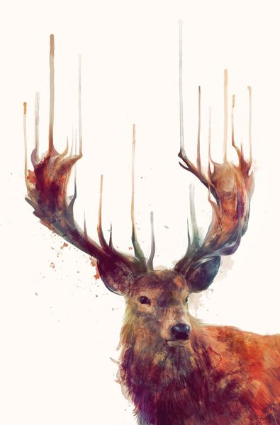 Red Deer // Stag by Amy Hamilton. http://society6.com/product/Red-Deer-Stag-ENV_Print