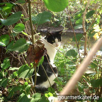 Katze Kitti