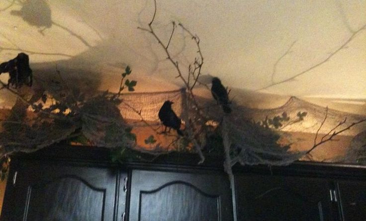 ravens atop of the shelving