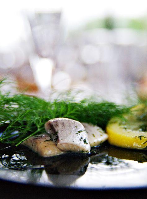 Sköna Sillar - Vi som älskar sill: Dillsill med citron