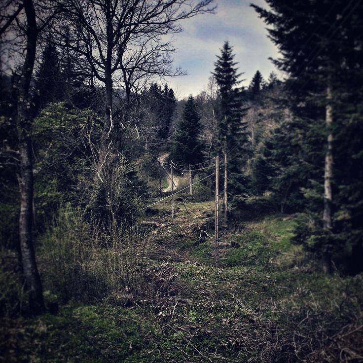 Podkarpacie #ropienka #podkarpacie #lasy #forest #niceday #sun