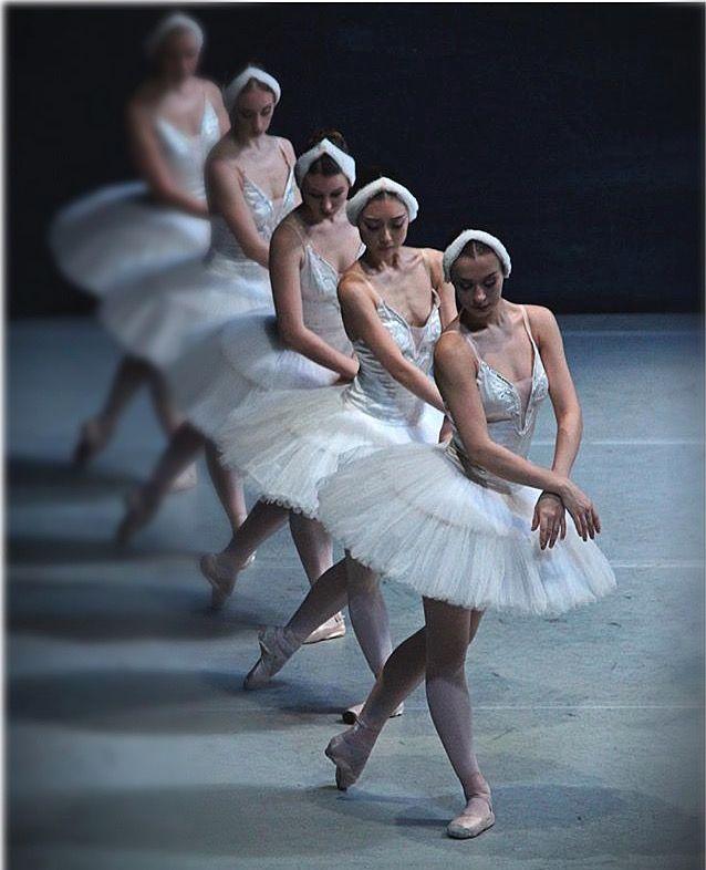 #swan#wite swan
